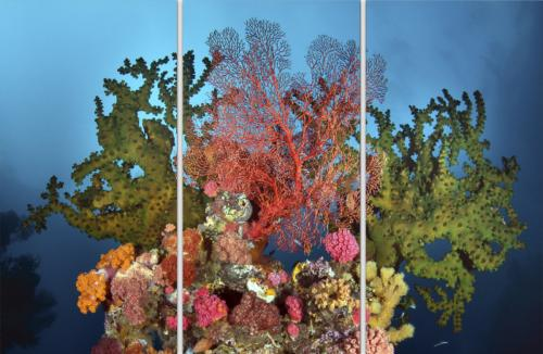 Coral Garden Triptych - LIMITED EDITION